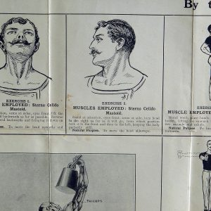 1930s muscles of the body poster health and fitness